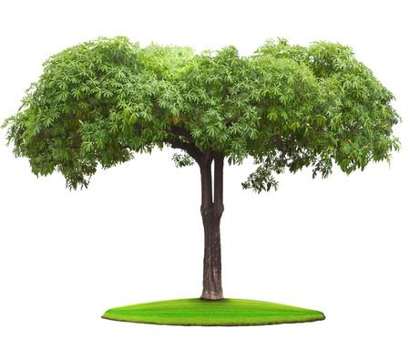 グリーン フィールド上の木の植物