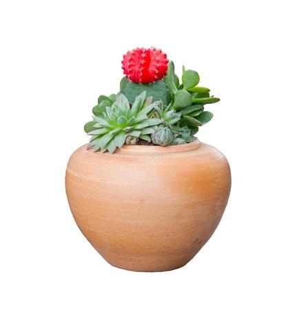 foe: cactus in clay pot foe decorated