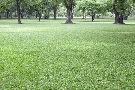 public park: campo de hierba verde en el parque p�blico Foto de archivo
