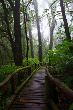 wood walking way in hill evergreen forest of Doi Inthanon National Park Thailand photo