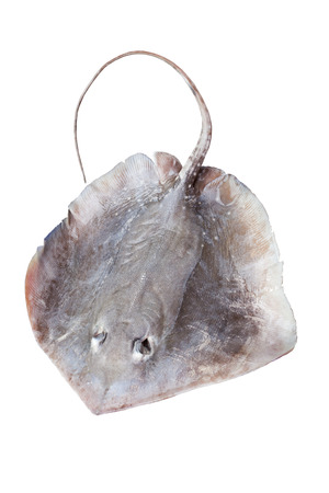 portrait of stingray isolated on white  版權商用圖片