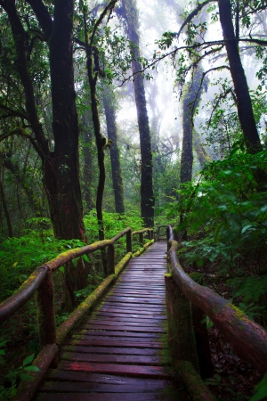 hill evergreen forest of Doi Inthanon National Park photo