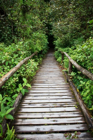 wooden walking way in hill evergreen forest of Doi Inthanon Chiangmai northern Thailand photo
