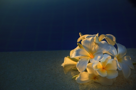 frangipani flower with beautiful light on water pool use for multipurpose  photo