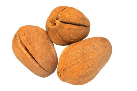 caoba: amplio de semillas de caoba de hoja aislado en blanco, caoba de buena fruta hierba para el tratamiento saludable