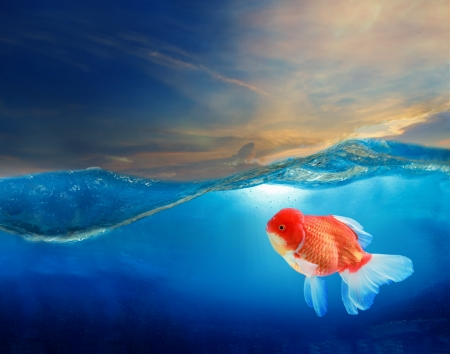 dusky: gold fish under blue water with beautiful dramatic sky