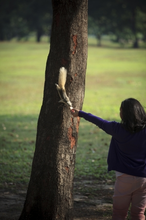 girl feeding food to squirrel on tree plan in public park photo