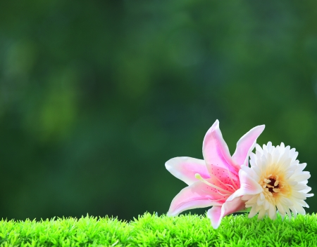 artificial pink lilly flower and white gerber on green grass field with beautiful blur background and copy space photo