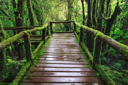 wet wooden trail birdge walking way at hill mountain evergreen forest Angkalaung Doi Inthanon Chiangmai northern of thailand photo