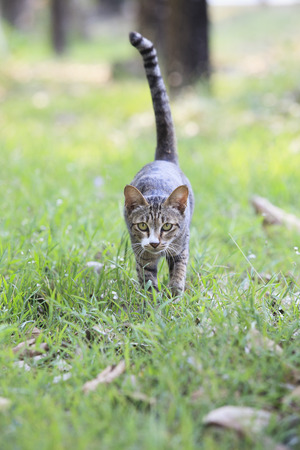out of doors: domestic cats standing on asphalt road use for multipurpose and travel  Stock Photo