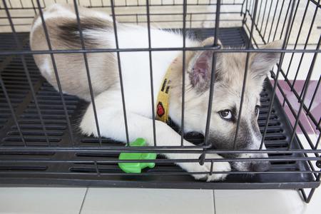 petshop: thai domestic dog in cage Stock Photo