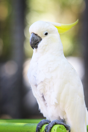 animal body part: portrait of white cockatoo birds perching on birds standing