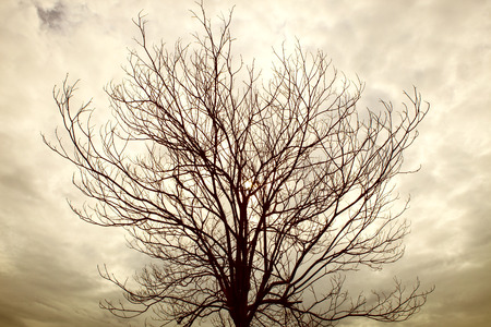 clody sky: dry tree branch with rainy cloudy day
