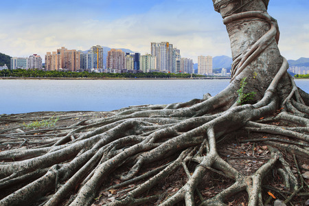 river scape: big root tree infront of city building concept forest and urban grow up together