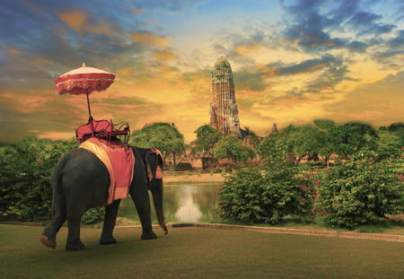 field of thai: elephant dressing with thai kingdom tradition accessories standing in front of old pagoda in Ayuthaya world heritage site use for tourism and multipurpose background , backdrop Stock Photo