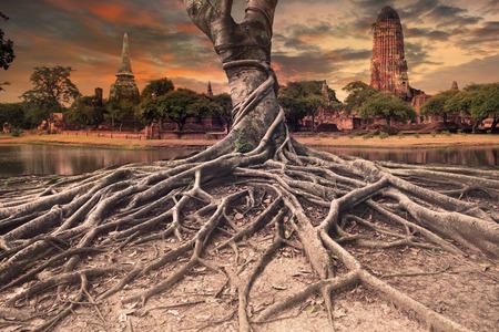 歴史寺アユタヤ、タイ観光の重要な地の中央に古代の古い塔のバンヤン ツリー土地景観の大きなルート 写真素材