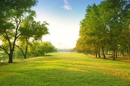 mooie ochtend licht in het openbaar park met groene gras veld en groene verse boom plant perspectief om ruimte te kopiëren voor multipurpose Stockfoto