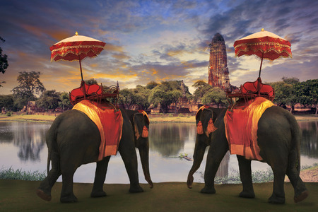 ayutthaya: elephant dressing with thai kingdom tradition accessories standing in front of old pagoda in Ayuthaya world heritage site use for tourism and multipurpose background , backdrop Stock Photo