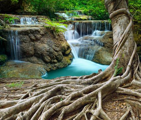 arbol con raices: árboles y cascadas de piedra caliza de higuera de Bengala en el bosque profundo pureza utilizan fondo natural, telón de fondo Foto de archivo