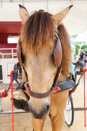 close up eyes: close up face of working horse with eyes blind path