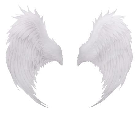 white birds wing feather,plumage isolated white background use for fantasy decoration Stock Photo