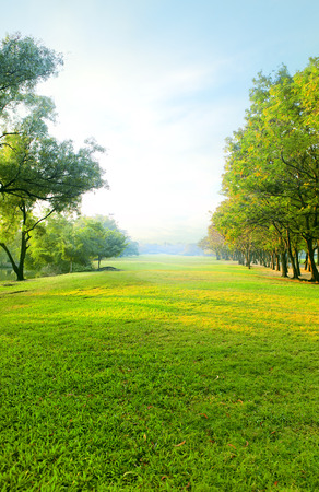 beautiful morning light in public park with green grass field and green fresh tree plant perspective to copy space for multipurpose vertical form