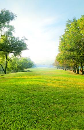 mooie ochtend licht in het openbaar park met groene gras veld en groene verse boom plant perspectief te kopiëren ruimte voor multifunctioneel verticale vorm Stockfoto