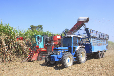 agricultural tools: heavy machine cutting sugar cane in agriculture plantation field use for sugar and food agricultural industry topic Stock Photo
