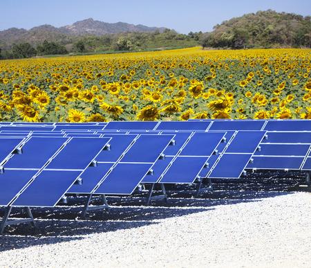 Sonne Solarzellenpaneele nad Sonnenblumen-Feld Verwendung als natürliche elektrische Energie und reine Energie der Natur Quelle