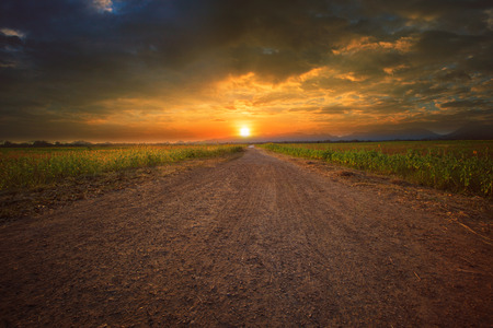 land scape: beautiful land scape of dusty road perspective to sun set sky with sunflowers plant beside the way Stock Photo
