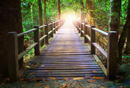 walk in the park: perspective of wood bridge in deep forest crossing water stream and glowing light at the end of wooden ways