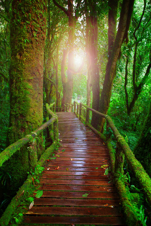 evergreen trees: wood ways in mountain rain forest Doi Inthanont National Park Chiangmai northern of Thailand and beautiful flare light use for nature and wilderness background,backdrop