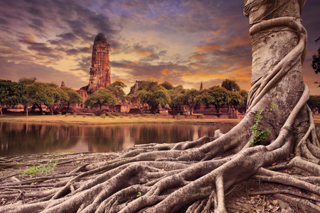 land scape: big root of banyan tree land scape of ancient and old pagoda in history temple of Ayuthaya  Stock Photo