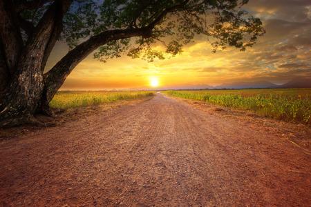 land scape van dustry weg in landelijke scène en grote regen boom plant tegen prachtige zonsondergang hemel gebruik voor natuurlijke achtergrond Stockfoto
