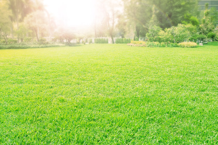 vibrant of playground,meadow ,green grass field Stock Photo