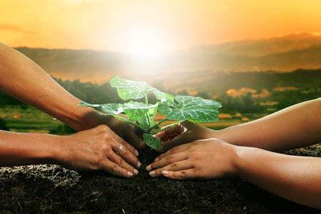 future space: human hand planting young plant together on dirt soil against beautiful sun light in plantation field Stock Photo