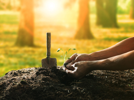 conceptual of hand planting tree seed on dirty soil against beautiful sun light in plantation field use for human activities and future growthing