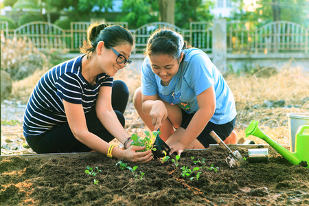 happy asian people: mother and young daughter planting vegetable in home garden field use for people family and single mom relax outdoor activities