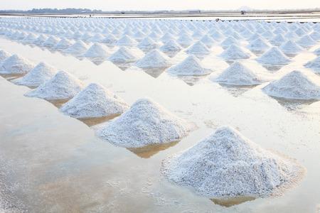natural process: Heap of sea salt in original salt produce farm make from natural ocean salty water preparing for last process before sent it to industry comsumer