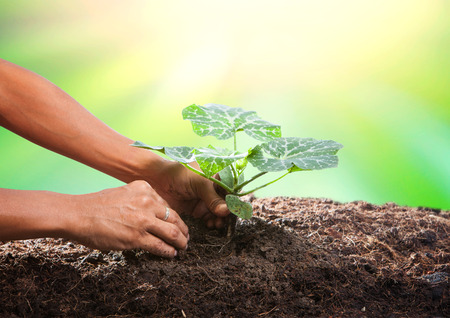 body scape: conceptual of hand planting tree seed on dirty soil against beautiful sun light in plantation field use for human activities and future growth Stock Photo