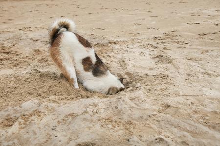 ostrich: cabeza de perro en la playa de arena como la vergüenza y el miedo de avestruz