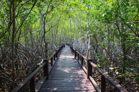land scape: beautiful land scape of wood way bridge in natural mangrove forest