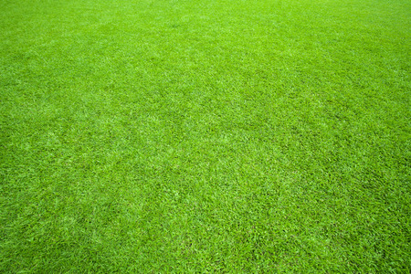 pattern of green grass field use as background,backdrop,natural texture