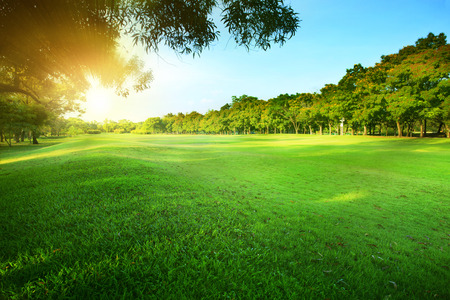 beautiful morning sun shining light in public park with green grass field and green fresh tree plant perspective use as  copy space and natural background,backdrop photo