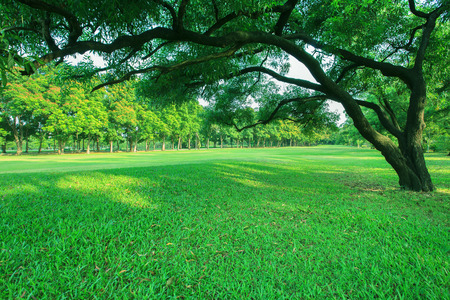 door leaf: beautiful morning light in public park with green grass field and green fresh tree plant perspective to copy space for multipurpose