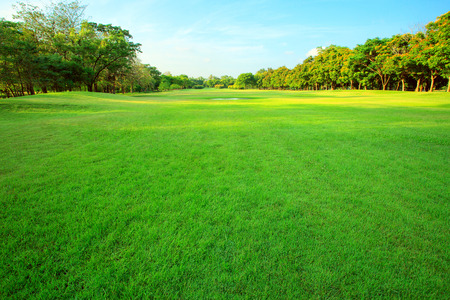 land scape: beautiful morning light in public park with green grass field and green fresh tree plant perspective to copy space for multipurpose