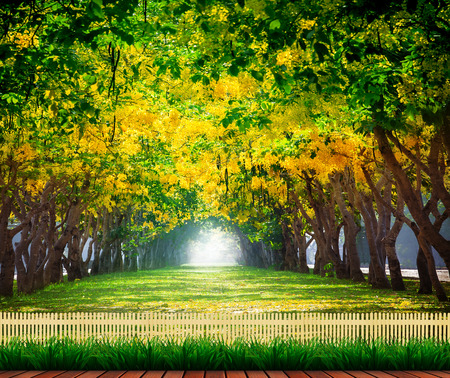 land scape: wood terrace with fresh and green beautiful of summer blooming yellow flowers tunnel in park , Golden shower,Cassia fistula,perspective land scape use for natural background,backdrop