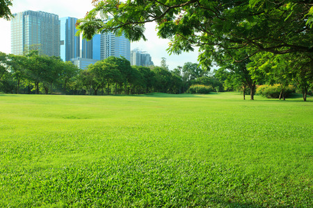 perspective: beautiful morning light in public park with green grass field and green fresh tree plant perspective to copy space for multipurpose