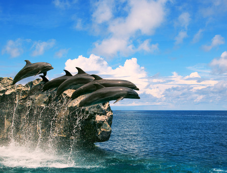 flying float: flock of dolphin jumping through sea water and floating mid air against beautiful cloudy day over natural horizontal