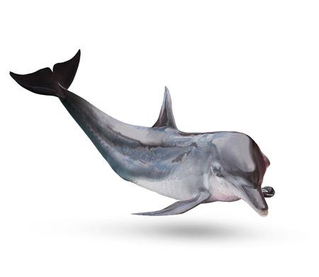 fullbody: full body of sea dolphine isolated white background